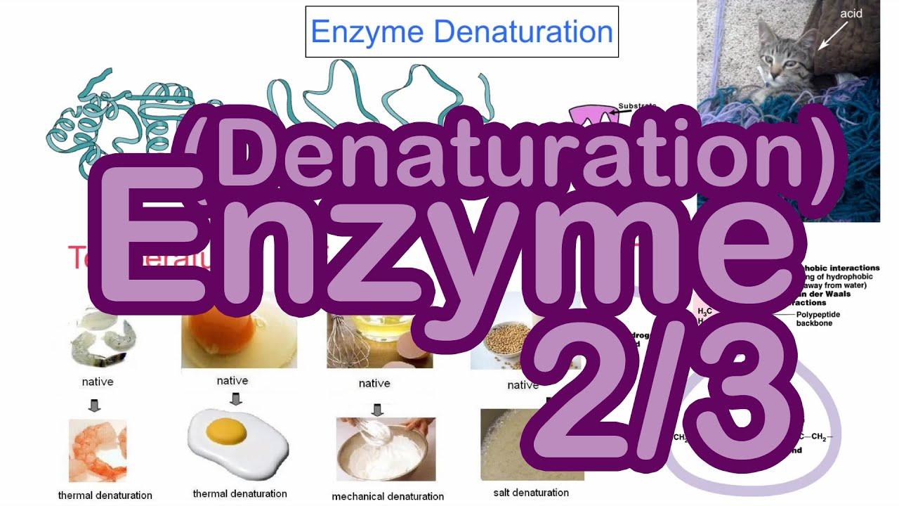 DSE Bio 【生物王】 Unit 2.2 酶會變性?(中文字幕) Enzyme denature?(English subtitle)【Biology King】 - YouTube