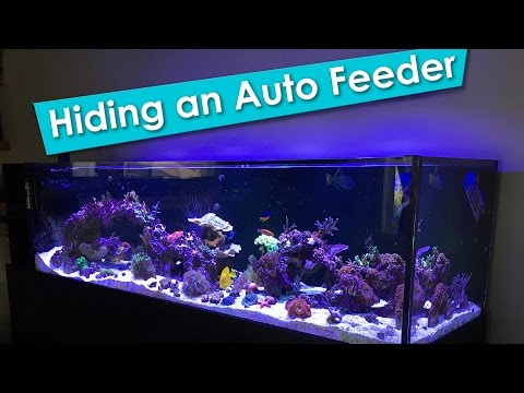 Hiding An Aquarium Auto Feeder On A Rimless Saltwater Reef Tank