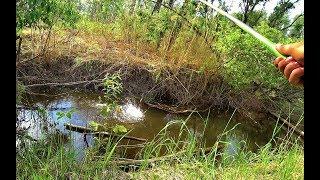 В РУЧЬЕ 20 СМ А КАБАНЫ КЛЮЮТ Крупный окунь лещ на поплавок Рыбалка на Алтае