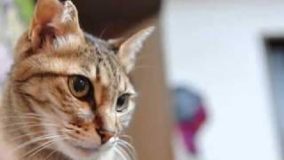 我が家の可愛い子猫たちを動画でご覧ください。 もとは7匹すべてが捨て...