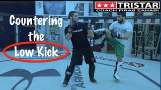 How to Fight Muay Thai - Countering the Low Kick - Firas Zahabi