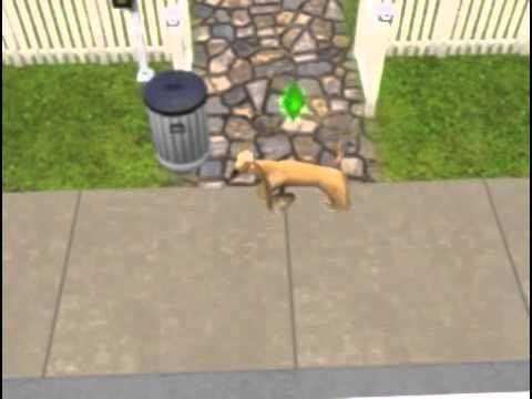 Sims dog