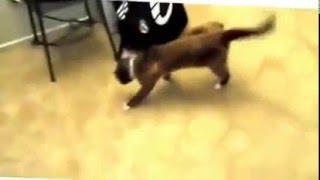 Funny Animal Videos  mp4