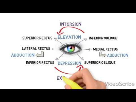 EXTRAOCULAR MOTILITY TEST (BINOCULAR VISION)