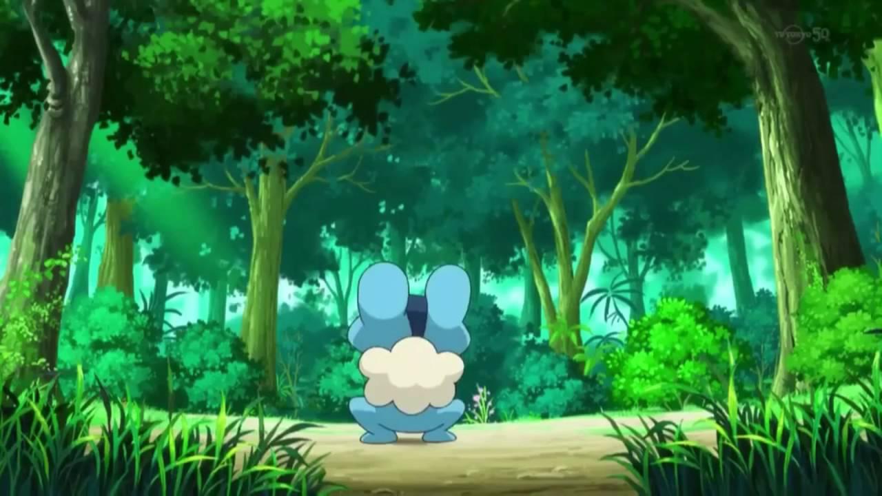 Girl In Forest Wallpaper Pokemon Xy Anime Bgm Santalune Forest Youtube