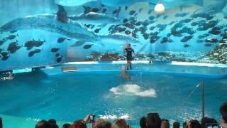 Шоу дельфинов, зоопарк Барселоны