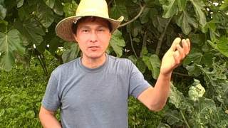 Grow Vegetables in Your Front Yard - Questions and Answers