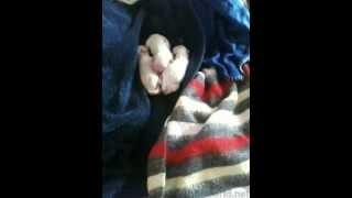 Newborn Puppies - Zuchon - (bichon Frise / Shih Tzu Hybrid)
