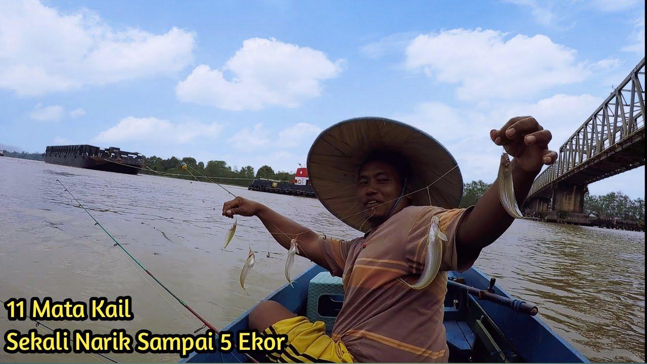 Pesta Ikan Gurih Dan Mahal...!!! Mancing Lais Jumbo Di Bawah Kolong Jembatan