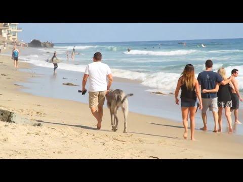 Laguna Beach: Where Art and Nature Thrive