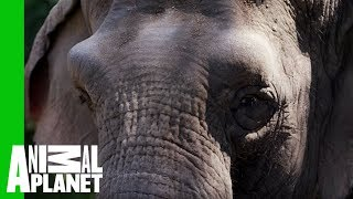 Fighting the Ivory Trade<