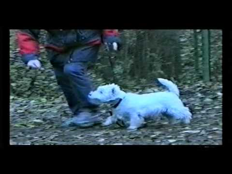 AGILITY. FIRST IN RUSSIA WEST HIGHLAND WHITE TERRIER,. 2002.