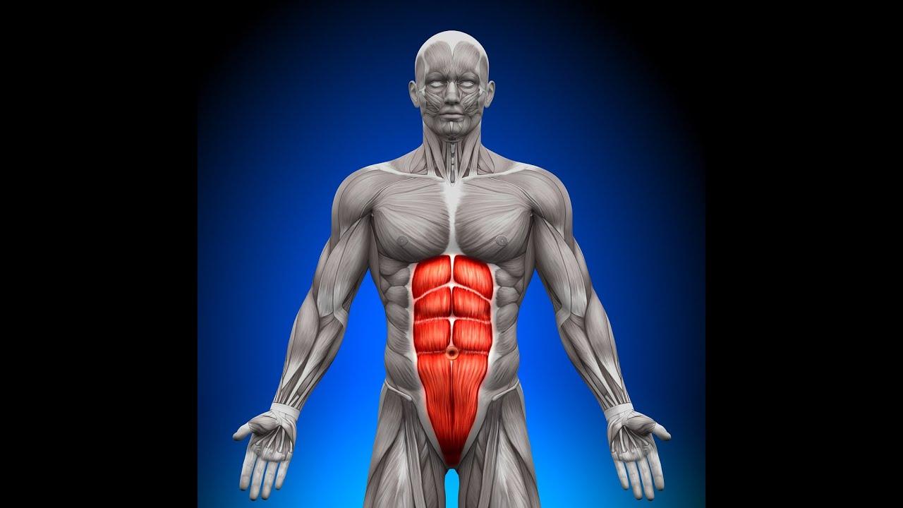 練習腹肌(腹部,臀部)