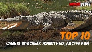 Топ 10 самых опасных животных в Австралии(Видео ролик представляющий из себя ТОП 10 самых опасных животный живущих в Австралии, хотя я думаю все мы..., 2016-06-05T14:45:26.000Z)