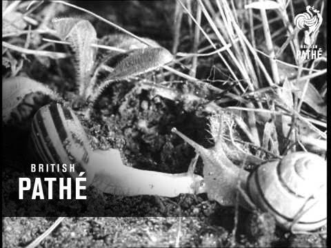 Summertime Meadow (1940-1949)