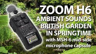 ZOOM H6 with MSH-6 Nature Sounds - 'Birds and the Bees'