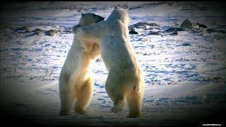 BBC Дикая природа России - Таежный край Приморье