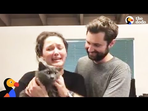 Cat Reunited With Family After California Mudslide | The Dodo