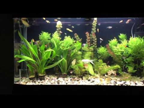 arabic aquarium