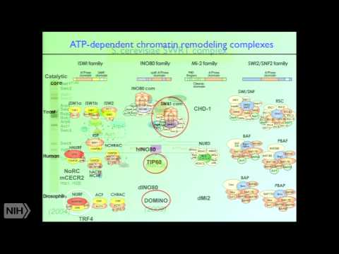 Chromatin Structure and the Control of Gene Expression