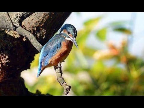 Успокаивающее пение птиц (НА ВИДЕО РЕАЛЬНЫЕ КАДРЫ ЖИВОГО ЛЕСА) Звуки природы