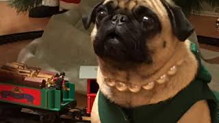 Maisy the Crazy Pug and Daisy another new original song.