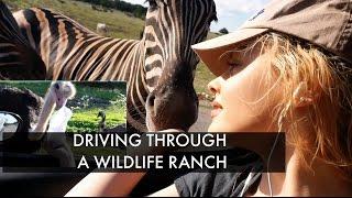 FEEDING AFRICAN ANIMALS - Wildlife Ranch Drive Thru