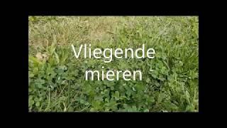 Vliegende mieren in mooi Rotterdam (Maurice Meeuwissen)