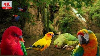 Oiseaux Exotiques -6 heures de chant relaxant- Cascade, Se détendre et dormir screenshot 2