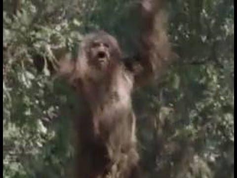 Youtube Shooting Bigfoot