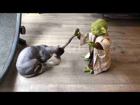 The Dark Lord vs. Yoda | Star Wars