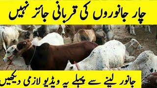 4 جانوروں کی قربانی جائز نہیں ہے   قربانی کہ مسائل   QurbanTv.