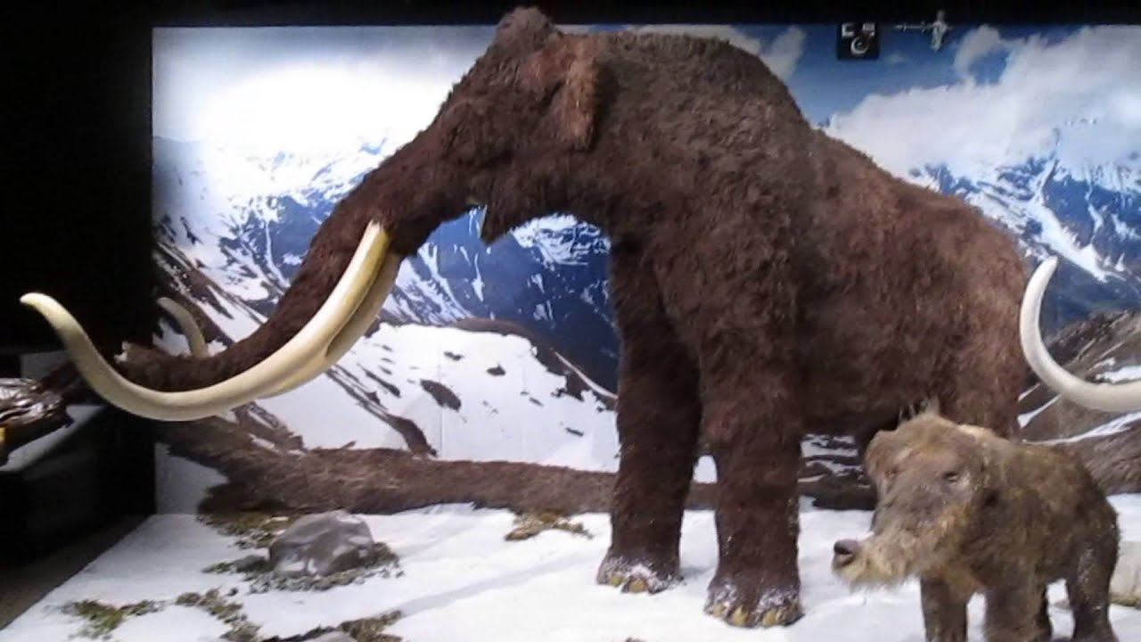 Ice Age Tiere