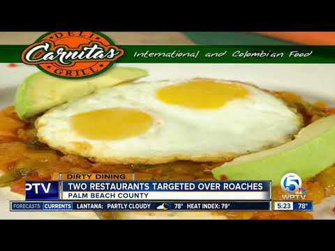DIRTY DINING: 45 live roaches found inside Lake Worth Latin American restaurant