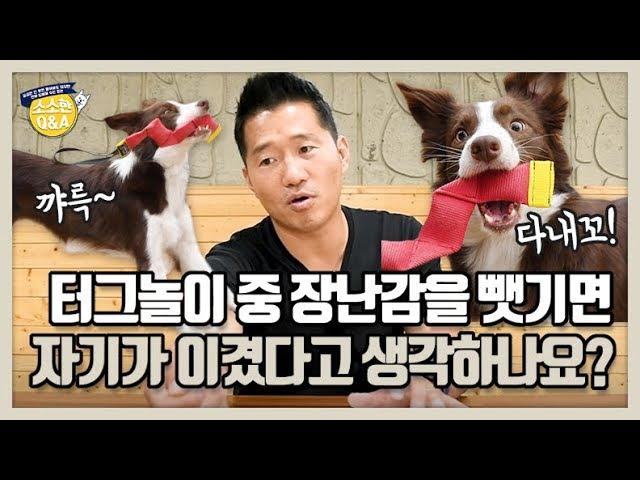 [Eng sub] 터그놀이 중 장난감을 뺏기면 자기가 이겼다고 생각하나요?|강형욱의 소소한 Q&A