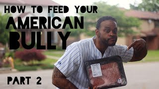 How To Feed Your American Bully Puppy to Gain Weight Part 2