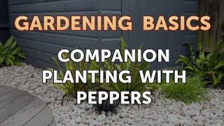 Companion Planting With Peppers