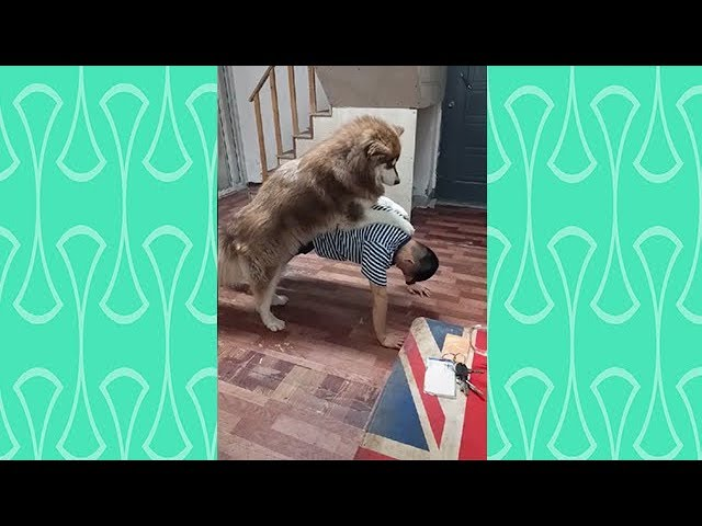 A reason why we can't exercise at home  |Funny dog videos