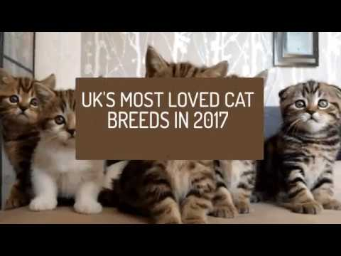 UK's Most Loved Cat Breeds In 2017
