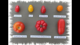 HGV How to grow your favourite tomatoes from slices of tomato start to finish