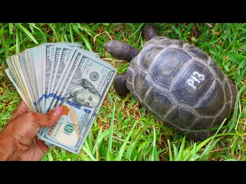 Buying Five $10,000 Dollar BABY Tortoise!!