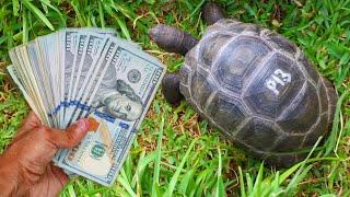 buying-five-10-000-dollar-baby-tortoise