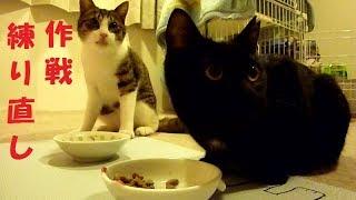 家猫修行中~ 作戦、練り直ししようか・・・