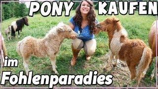 Pony kaufen - im Fohlen Paradies  ♥ soviele Mini Ponys!