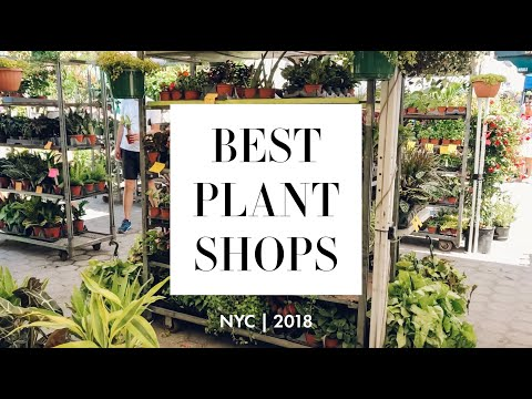 BEST PLANT SHOPS in NYC?! | PetAl Plants, The Sill, Urban Garden Center | Kara Isabella