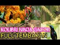 Konin Gacor Full Tembakan Dan Nyaring Konin Anda Pasti Ikut Bunyi  Mp3 - Mp4 Download