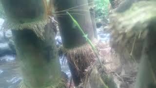 VIRAL! Video Ng*n**p orang <b>di</b> sungai #REAL