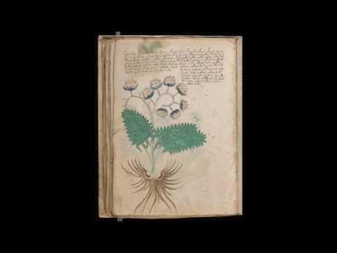 Рукопись Войнича все страницы скан