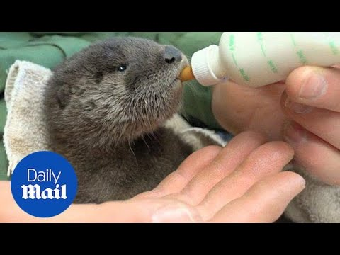 Utility workers rescue adorable baby otter from Arizona Canal - Daily Mail