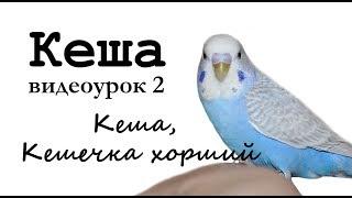 """Учим попугая по имени Кеша говорить, видеоурок 2: """"Кеша, Кешечка хороший"""""""